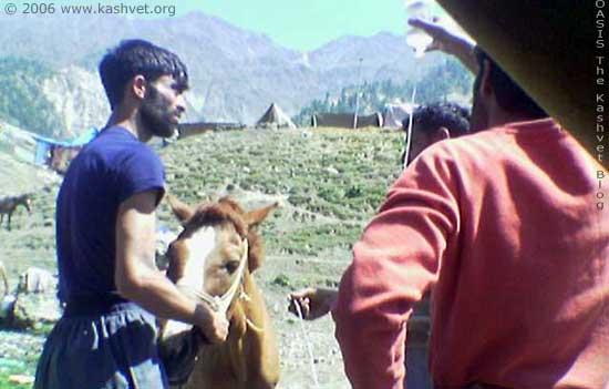 horse_iv.jpg