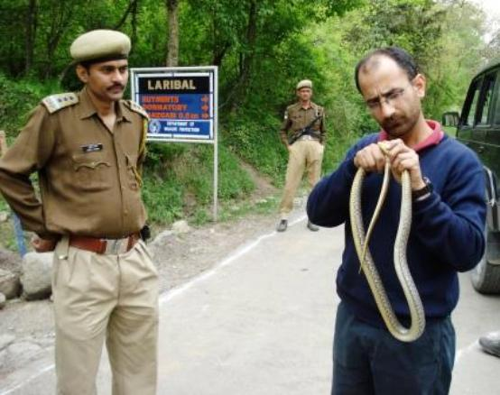 rat snake rescue dachigam tick infestation