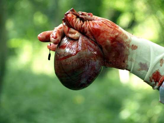 bear gall bladder bile fluid